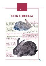 Gran Chinchilla